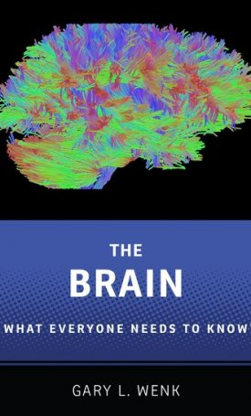 The Brain -  What Everyone Needs To Know
